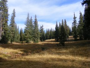A meadow at the headwaters of the North Fork Encampment River