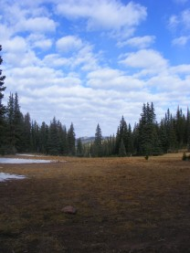 Meadow in the Huston Park Wilderness