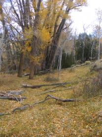 Autumnal foliage on the Encampment River of Wyoming