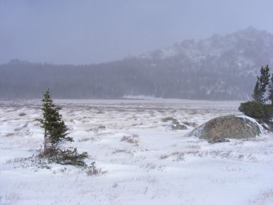 Windy day of hiking along Shoshone National Forest Trail No. 804.2A