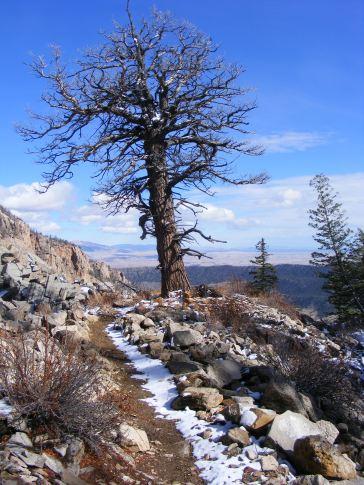 The Whiskey Mountain Trail No. 804, near Torrey Rim
