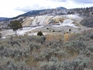 Mammoth Terraces, with some elk to the right