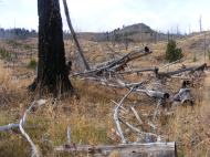 Hiking through a burned forest on Sepulcher Mountain in Yellowstone National Park