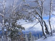 Trees on Sepulcher Mountain, encrusted with snow