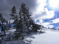 Near the summit of Sepulcher Mountain in Yellowstone National Park on a blustery day