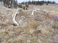 Elk antlers shed on a boulder on Mount Everts