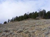 Douglas fir forest atop Mount Everts