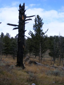 Snag, home to wildlife, on Mount Everts
