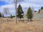 Aspen, Douglas fir, grasses, herbage and sagebrush on Mount Everts