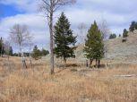 Aspen, Douglas fir, grasses, herbage and sagebrush on Mount Everts