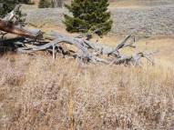 Dry vegetation and old log on Mount Everts