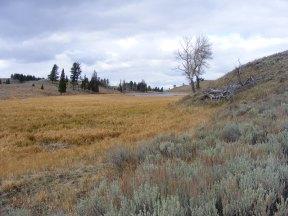 Walking across a meadow on Mount Everts