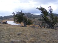 Another small pond on Mount Everts, past wind bent Douglas fir
