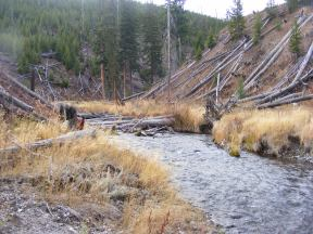 Lava Creek, upstream from the picnic area of the same name