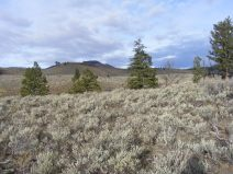 Home of the ungulates and their predators, the sagebrush steppe near the confluence of the Yellowstone and Lamar Rivers, in Yellowstone National Park