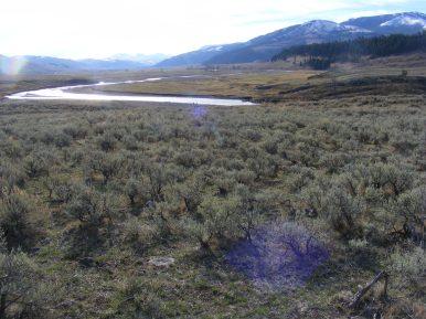 Sagebrush steppe in Lamar Valley, Yellowstone National Park, Wyoming