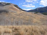 Another Autumnal view up Brush Creek, from Gunnison National Forest Road 738.2A