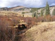 Deer Creek in the Elk Mountains