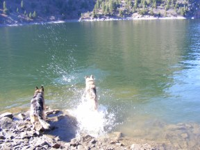 Leah and Draco chasing the ball in Morrow Point Reservoir