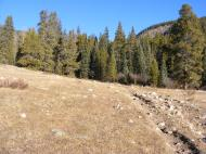 The Fossil Ridge Trail No. 478 on the Gunnison National Forest, near the Gold Creek Trailhead
