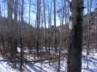 Aspen forest on Cabin Creek, half a mile to a mile above East Cabin Creek