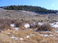 Douglas fir on the upper slopes, sagebrush melding into grassy meadow below