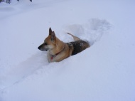 Draco resting in the deep snow of Comanche Gulch