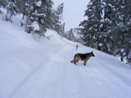 Leah and Draco just above the Gold Creek Winter Trailhead