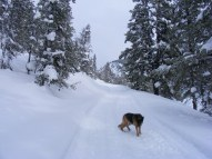 Leah on the Gold Creek Road where it was compacted by a snow-cat