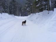 Leah on Gold Creek Road