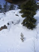 Snowballs on a slope, formed when snow falls from the branches and rolls down