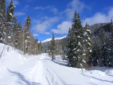 On the Gunnison National Forest, Road 765 along North Quartz Creek