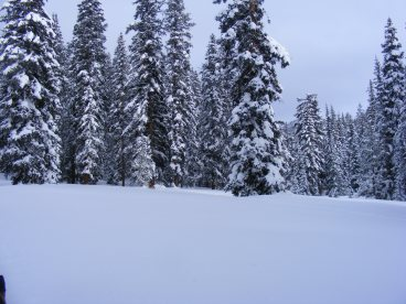 Conifers on Gold Creek encrusted in snow
