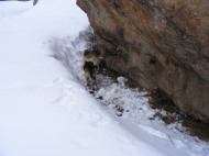Leah and Draco in a sheltered lee, demonstrating the depth of the snowpack