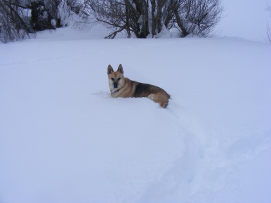 Draco resting in the snow on Willow Creek