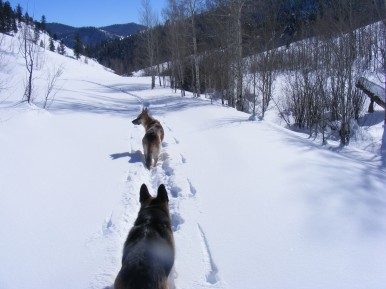 Draco leading Leah, on our way down Willow Creek