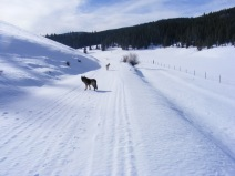 Leah and Draco on Gunnison National Forest Road 780, the lightest skiff of snow evident covering the base