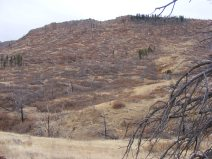 Burned slope in upper North Red Creek, now regrown with brush