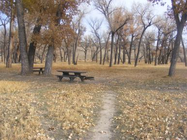 The cottonwood forest at Deerlodge Park Campground