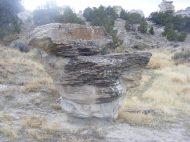 A mushroom cap at Castle Gardens