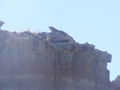 Lizard rock at Gooseberry Creek Badlands