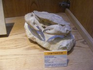 Large fossil crab at the Wyoming Dinosaur Center in Thermopolis, Wyoming