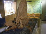 At the Wyoming Dinosaur Center in Thermopolis, Wyoming