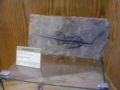 Small reptile from the late Triassic, excavated from China, now at the Wyoming Dinosaur Center in Thermopolis, Wyoming