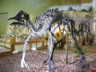 Part of the collection at the Wyoming Dinosaur Center in Thermopolis, Wyoming