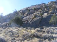 Sparse vegetation on the granite