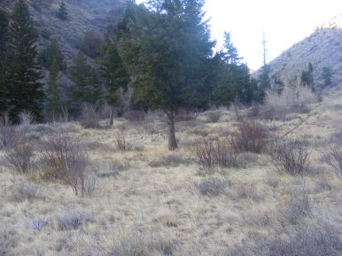 Grassy bottom lands along the Encampment River