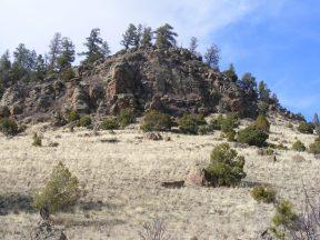 Ponderosa and pinyon pine