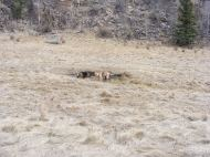 Draco and Leah exploring a small watering hole on a tributary of East Pass Creek