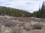 South of Duck Pond, near the divide between East pass and Spanish Creeks